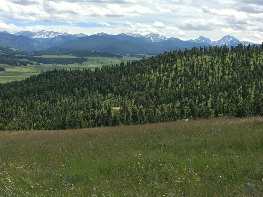 81 Grizzly Country Ln Lane Philipsburg Montana 59858 Land for Sale