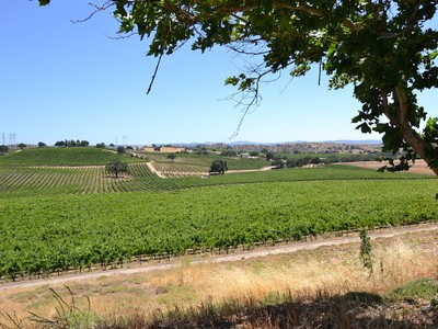 Maison unifamiliale for sales at Professional Vineyard Operation 4825 Mill Road Paso Robles, California 93446 United States