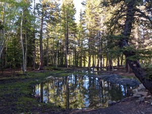 Additional photo for property listing at 89 Sheep Creek Trail    Fairplay, Colorado 80440 États-Unis