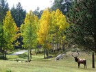 Land for sales at Stagecoach Stop 3384 Timbergate Trail  Evergreen, Colorado 80439 United States