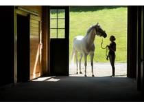 Landgut / Bauernhof / Plantage for sales at Equestrian Property 139 Otter Lane   Warren, Vermont 05674 Vereinigte Staaten