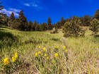Terrain for  sales at Red Tail Ranch 30194 Wild West Trl Evergreen, Colorado 80439 États-Unis