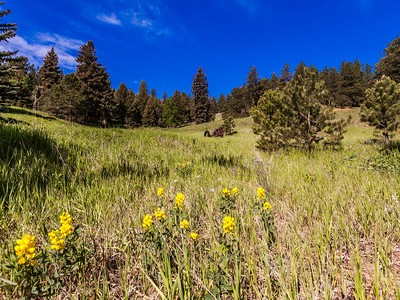 Land for sales at Red Tail Ranch 30194 Wild West Trl Evergreen, Colorado 80439 United States