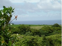 Land for sales at Tropical Waterfall Estate Kuhio Hwy.   Kilauea, Hawaii 96754 United States