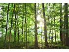 Land for  sales at Private and Tranquil Wooded Oasis 3370 S 450 E ADJ   Whitestown, Indiana 46075 United States