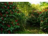 Farm / Ranch / Plantation for sales at Finca Hermosa  Atenas, Alajuela 20501 Costa Rica