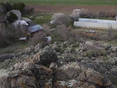 Ферма / ранчо / плантация for sales at Tropical Fruit Farm 4785B River Road Buhl, Айдахо 88331 Соединенные Штаты