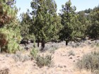 Land for  sales at 1934 NW Balitch    Bend, Oregon 97701 United States