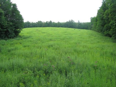 Terrain for sales at Magnificent Country Setting Reed Road Warren, Connecticut 06754 États-Unis