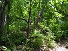 Terreno for  sales at Forest Creek Estate Creek Side Drive Lot #8  Indian Hill, Cincinnati, Ohio 45243 Estados Unidos