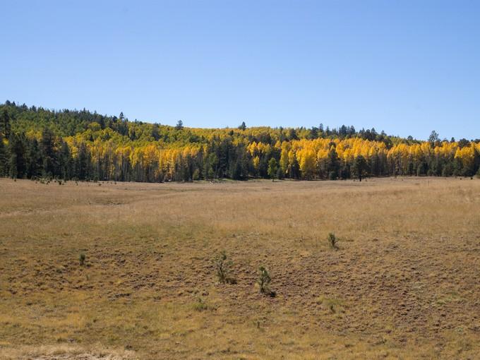 独户住宅 for sales at Bear Aspen Ranch 0 Hart Prairie RD  Flagstaff, 亚利桑那州 86001 美国