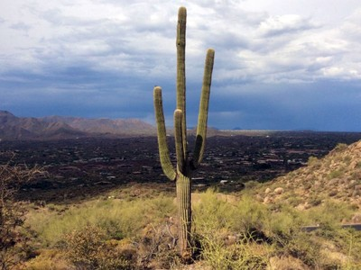 Terreno for sales at 5.1 Acres in the Premier Subdivision in Carefree and Cave Creek Lot 2 Hawksnest Drive #2 Cave Creek, Arizona 85331 Stati Uniti