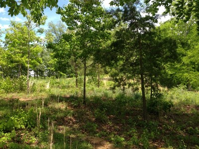 Đất đai for sales at Bluff Crest Estates Lot 5 & 6 Wendy Lane Friendsville, Tennessee 37737 Hoa Kỳ