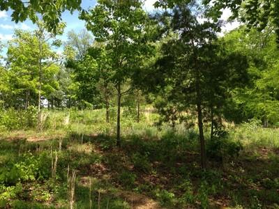 土地,用地 for sales at Bluff Crest Estates Lot 5 & 6 Wendy Lane Friendsville, 田纳西州 37737 美国
