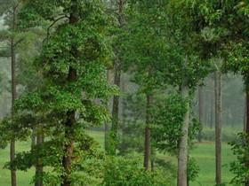 Granjas / Hacienda / Platanción for sales at Equestrian Farmette 1539 Bear Creek Road Lot #11 Moreland, Georgia 30259 Estados Unidos