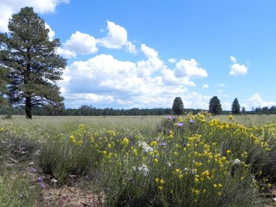Land for sales at Stunning 318 Acres surrounded by National Forest 00 Forest Service 140 RD Williams, Arizona 86046 United States