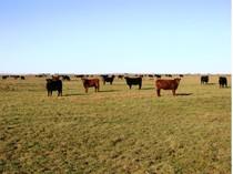 Farm / Ranch / Plantation for sales at La Delfina Buenos Aires Other Buenos Aires, 부에노스아이레스 7400 아르헨티나