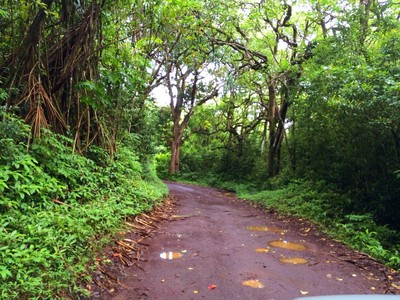 Land for sales at 20 Acres of Privacy in Heavenly Hana! Ulaino Rd. #40 Hana, Hawaii 96713 United States