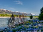 Terrain for sales at Snake River Parcel Convenient to Town 465 S Ely Springs Road  Jackson, Wyoming 83001 États-Unis