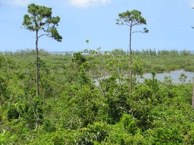 Land for sales at Loggerhead Creek Marsh Harbour, Abaco Bahamas