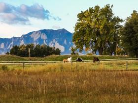 Farm / Ranch / Plantation for sales at 1538 75th Street  Boulder, Colorado 80303 United States