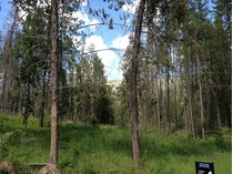 Land for sales at Homesite Bordering National Forest Lot 7 Indian Creek Subdivision   Alpine, Wyoming 83128 Vereinigte Staaten