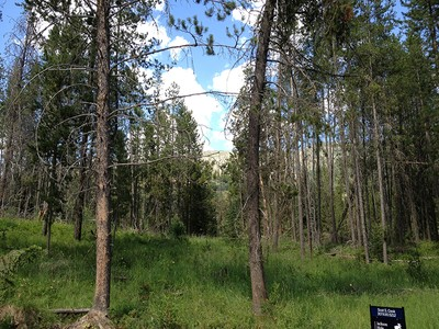 Terrain for sales at Homesite Bordering National Forest Lot 7 Indian Creek Subdivision Alpine, Wyoming 83128 États-Unis