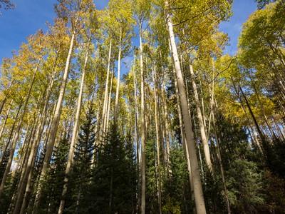 Земля for sales at Lot 325 Benchmark Drive TBD Benchmark Drive Telluride, Колорадо 81435 Соединенные Штаты
