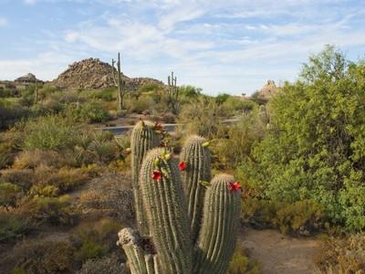 Земля for sales at Spectacular Interior Corner Homesite In Gated Troon North's Pinnacle Canyon 10399 E Mark Lane #25 Scottsdale, Аризона 85262 Соединенные Штаты