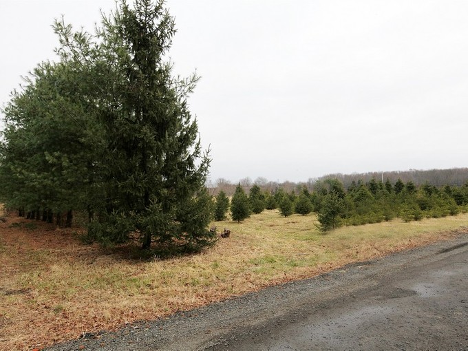 Land for sales at 2 Highbridge Road  Manalapan, New Jersey 07726 United States