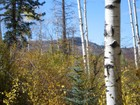 Land for  sales at Pines 25 460 Pine Crest Drive Snowmass Village, Colorado 81615 United States