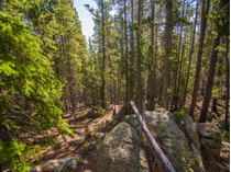 Terreno for sales at Land with Privacy and Beautiful Views 0 County Road 422   Evergreen, Colorado 80439 Stati Uniti