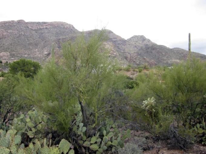 Land for sales at Rare 1.33 Custom Homesite in Gated Skyline Country Club 4865 E Placita Tres Vidas #268 Tucson, Arizona 85718 United States
