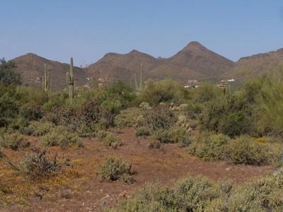Maison unifamiliale for sales at New, Top Quality Home 6400 E Seco Pace Cave Creek, Arizona 85331 États-Unis