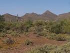 Maison unifamiliale for sales at New, Top Quality Home 6400 E Seco PL Cave Creek, Arizona 85331 États-Unis
