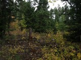 Property Of Exceptional Whitefish Lake View