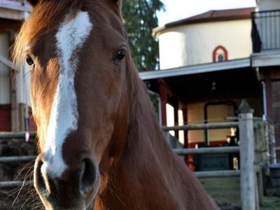 Ferme / Ranch / Plantation for sales at Maplebrook Farm 3590 Cavin Road Duncan, Colombie-Britannique V9L6T2 Canada