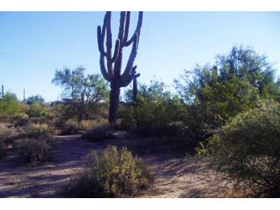 Đất đai for sales at Large 5-Acre Parcel Situated In The Heart Of North Scottsdale XXXX XXXX #0  Scottsdale, Arizona 85266 Hoa Kỳ