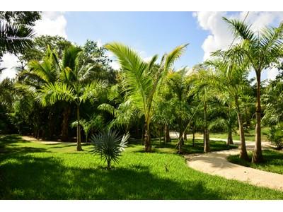 Land for sales at LE JARDIN  Playa Del Carmen, Quintana Roo 77712 Mexico