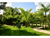 Land for sales at LE JARDIN  Playa Del Carmen,  77712 Mexico