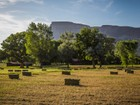 Hayvan Çiftliği/Çiftlik/Ekili Alan for  sales at Bernhard Farm 3627 Grand Valley Canal Road   Palisade, Colorado 81526 Amerika Birleşik Devletleri