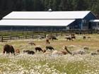 Terrain for  sales at Equestrian Ranch of WA 16641 Old Highway 99  Tenino, Washington 98589 États-Unis