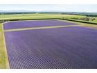 Fazenda / Rancho / Plantação for  sales at NZLavender Other Canterbury, Canterbury Nova Zelândia