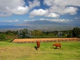 Property Of Lani Nui Ranch - Ultimate Contemporary Estate