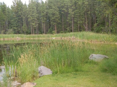 Đất đai for sales at Acreage with pond NHN Rainbow Drive  Bigfork, Montana 59911 Hoa Kỳ