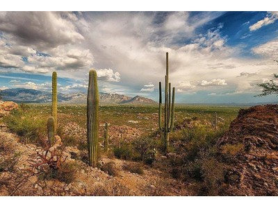 Land for sales at Gorgeous Elevated 20+ Acre Parcel Of Land Is A Sonoran Desert Masterpiece 14390 N Tortolita Estates Drive  Tucson, Arizona 85742 United States