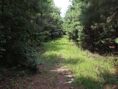 Land for sales at Cross Swamp 10 Round O Road   Round O, South Carolina 29474 United States
