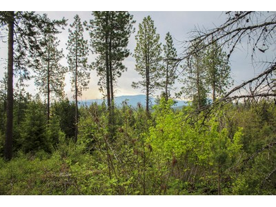 Land for sales at Treed home site with end of the road privacy Everett Huff Lot 1  Oldtown, Idaho 83822 United States