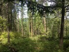 Terrain for sales at Timbered lot minutes from Whitefish 2597 US-93 W   Whitefish, Montana 59937 États-Unis