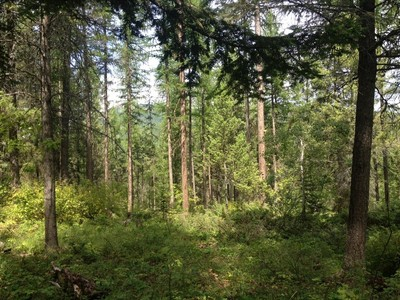 Terreno for sales at Timbered lot minutes from Whitefish 2597 US-93 W Whitefish, Montana 59937 Estados Unidos